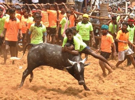 நாமக்கல் அருகே கரியபெருமாள்புதூரில் ஜல்லிக்கட்டு போட்டி : 15 காளையர்கள் காயம்
