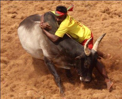 நாமக்கல் மாவட்டம் எருமப்பட்டி ஜல்லிக்கட்டு போட்டி 260  காளைகள் பங்கேற்பு; 5 பேர் காயம்